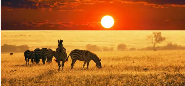 魅力南非精华8日游南非是一个自然环境和气候条件都比较好的国家