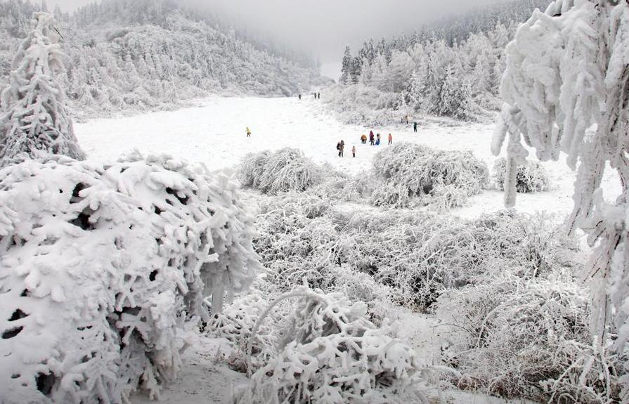 重庆仙女山冬天