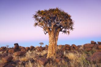 南非纳米比亚探索15天激动人心的风景、丰富的野生生命