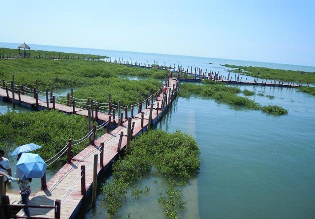 北海旅游,金海湾红树林生态旅游区