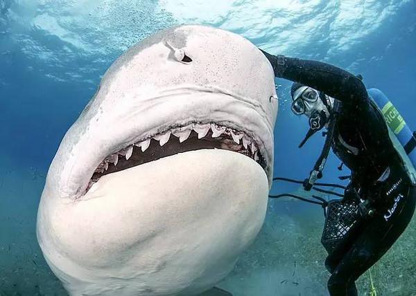 海底世界大白鲨