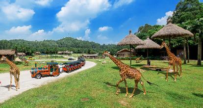 广州长隆野生动物园 欢乐世界 珠海海洋王国4日游(带你玩转广东)