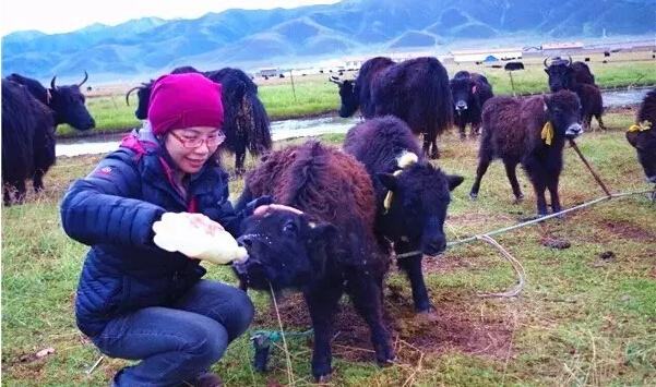 享受高原上游藏族的热情接待,和他们一起生活
