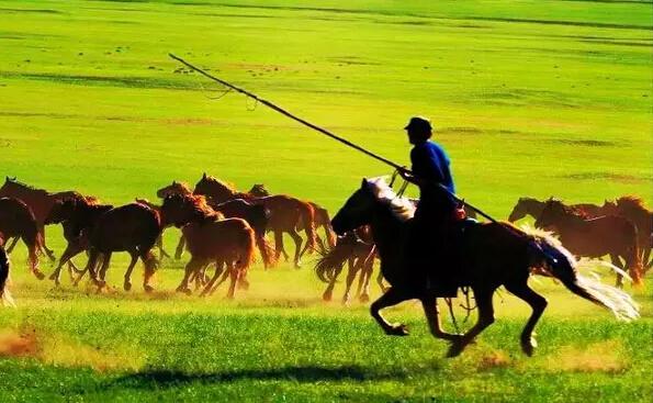 在最美草原自由翱翔——呼伦贝尔大草原