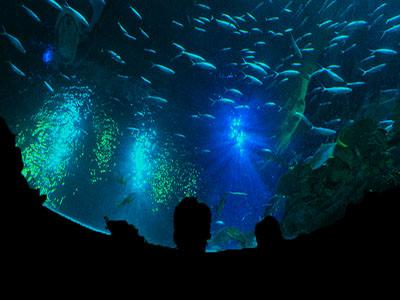 香港海洋公园3