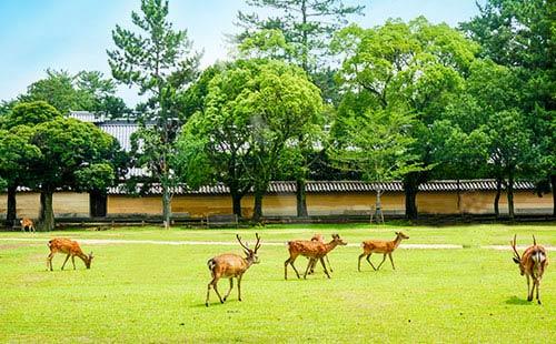 大阪城公园3