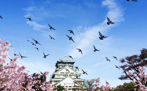 大阪城公园5