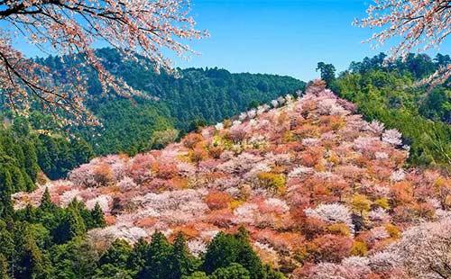日本東京+箱根+富士山+京都+奈良+大阪6日游悅春の雙古都