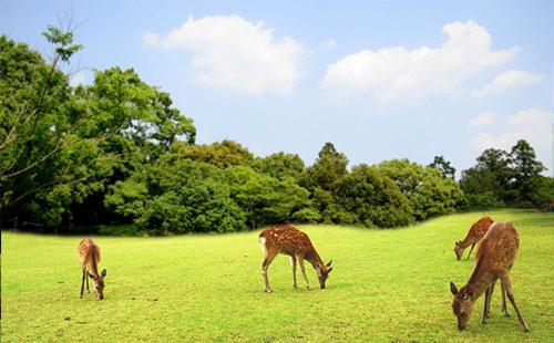 奈良公园4