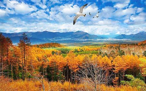 日本红叶季