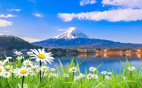 山中湖花之都公园3
