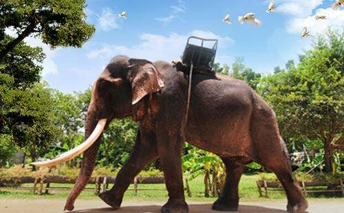 金娜丽大象公园2