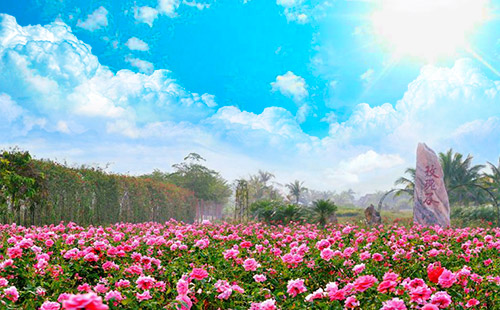 三亞分界洲島-香水灣-天涯海角-玫瑰谷雙飛6日游<一價全包>萬豪假期