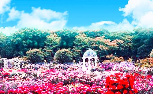 亚龙湾国际玫瑰谷2
