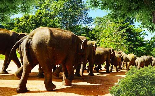 大象孤儿院2