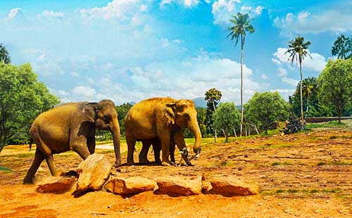 大象孤儿院3
