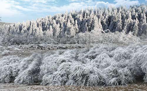 仙女山国家级森林公园2
