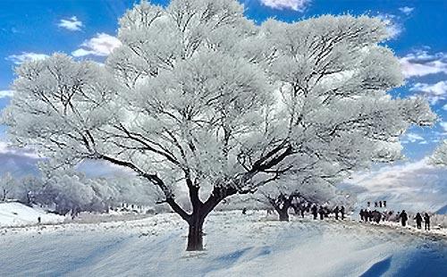 吉林雾凇-长白山-雪乡-哈尔滨百年铁路桥双飞滑雪6日游冰雪之恋 中俄朝三国风情
