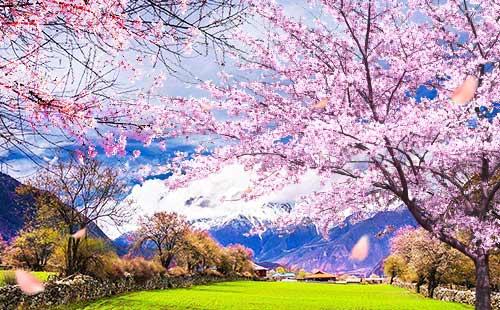 西藏林芝桃花沟3