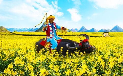 昆明-抚仙湖-贵州兴义-罗平-石林经典6日摄影游春暖花开
