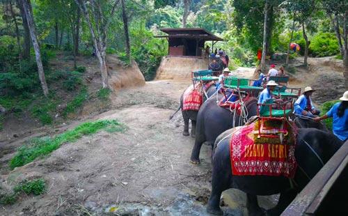 泰國·普吉島·金娜拉大象公園景點