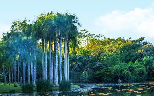 西双版纳热带植物园1