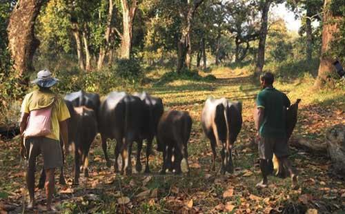 尼泊尔奇特旺国家森林公园