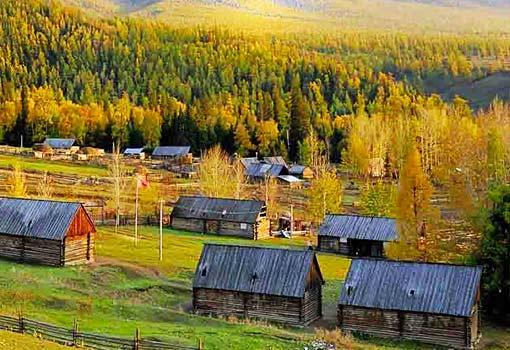 新疆白哈巴