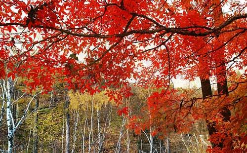 吉林红叶谷