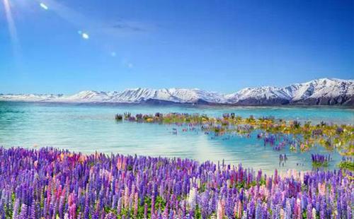 鲁冰花季·探秘新西兰南北岛10日<库克山国家公园+塔斯曼冰川湖游船+萤火虫洞+蒂卡波湖>纯净新西兰