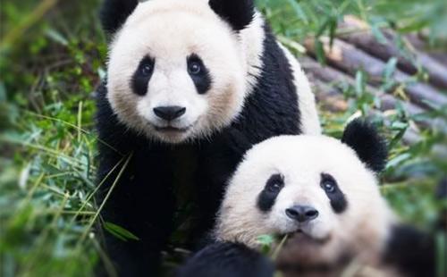 熊猫基地-3