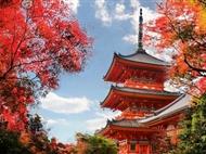 【日本本州】京都+奈良+富士山+东京赏秋泡汤6日游