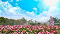 三亞分界洲島-香水灣-天涯海角-玫瑰谷雙飛6日游<一價全包>