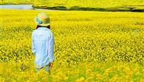 【團隊定制】潼南油菜花基地、雙江古鎮1日游