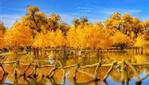 【额济纳旗大环线】兰州、张掖、金塔胡杨林、怪树林、额济纳旗、居延海、沙坡头双卧6-7日游