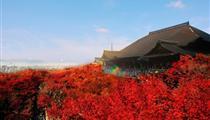 東京+富士山+大阪+京都+鐮倉+白川鄉7日游<國航直飛+雙合掌村>(探訪日本的童話世界)
