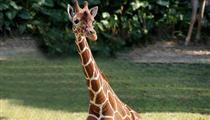 長隆野生動物園+海洋王國+歡樂世界雙動雙飛3/4日游<D4雙隆記-奇趣童真>