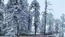 瓦屋山风景区赏雪+峨眉象城+烟雨柳江3日游<每周2/5发团>