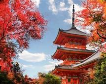 10月【日本本州】京都+奈良+富士山+东京赏秋泡汤6日游