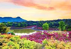 巴南南湖多彩植物园直通车一日游<重庆周边一日游>