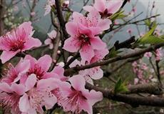 永川圣水湖挑花岛-松溉古镇1日游