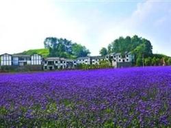 南川浪漫香草园、大观珍奇药用植物园一日游