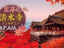 11月日本东京+箱根+富士山+镰仓赏枫6日游