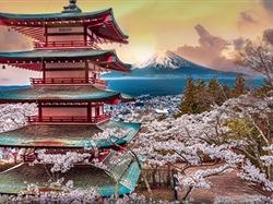 日本赏河津早樱-大阪+京都+奈良+富士山+东京6日游