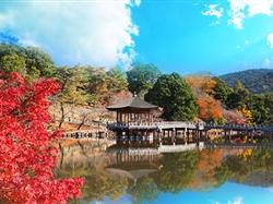 日本东京+富士山+奈良+京都+大阪7日游<国航直飞+全程0自费>