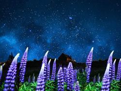 鲁冰花季·探秘新西兰南北岛10日<库克山国家公园+塔斯曼冰川湖游船+萤火虫洞+蒂卡波湖>