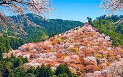 日本东京+箱根+富士山+京都+奈良+大阪6日游(悦春の双古都)