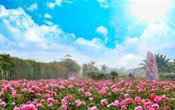 三亚分界洲岛-香水湾-天涯海角-玫瑰谷双飞6日游<一价全包>