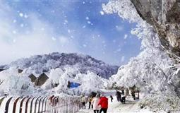 重庆南川金佛山-北坡赏雪滑雪一日游<含滑雪套票+中转车>