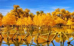 额济纳旗胡杨林、枯树林、张掖七彩丹霞、沙坡头纯玩双动7日游